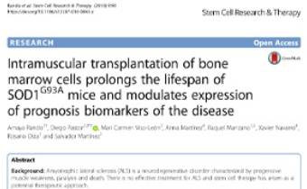Intramuscular transplantation of bone marrow cells prolongs the lifespan of SOD1G93A mice and modulates expression of prognosis biomarkers of the disease Innate Healthcare
